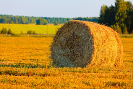 haycock: Harvest. Big haycock in the yellow field. Stock Photo