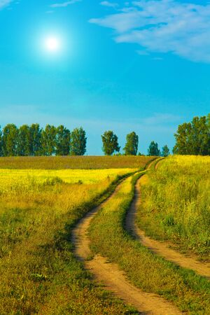 Lane in meadow and deep blue sky with white clouds photo