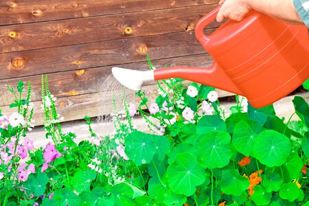 Watering flowers in sunny summer day photo