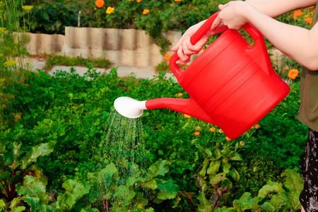Watering vegetables photo