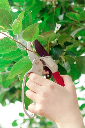 Trimming a tree Stock Photo - 11303047