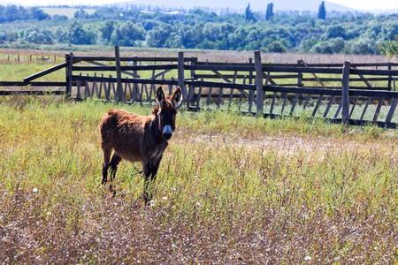 Donkey Stock Photo - 7919983