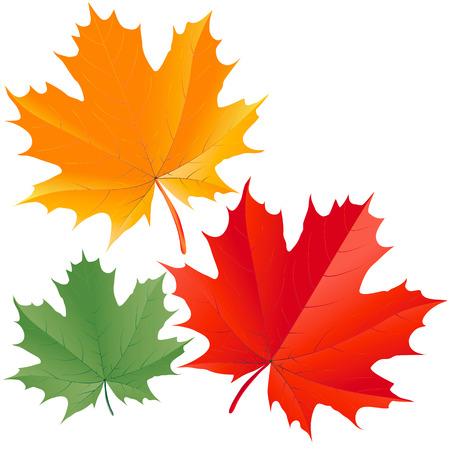 Kleurrijke esdoorn bladeren  Vector Illustratie