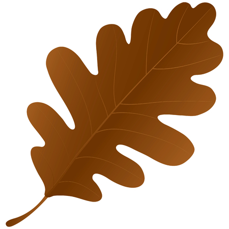 macro leaf: Autumn oak leaf isolated over a white background.