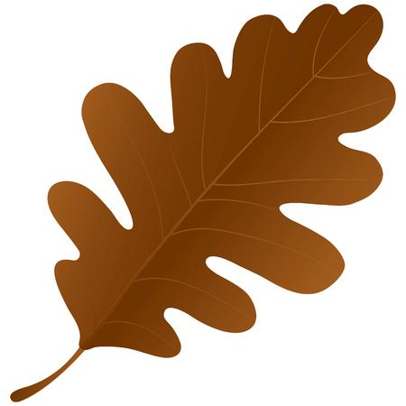 chene bois: Feuille de ch�ne automne isol� sur un fond blanc.
