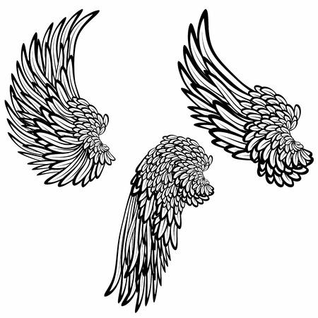 Set of wings photo