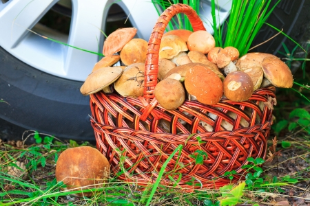 mycelium: Mushrooms in basket Stock Photo