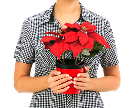 female holds a poinsettia, white background, copyspace photo