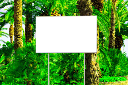 blank space: Blank billboard with a space for your information, tropical paradise background with big green palm leaves Stock Photo