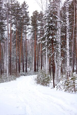 Winter in a deep forest
