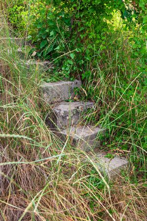 The old concrete stairs hiding in a grass