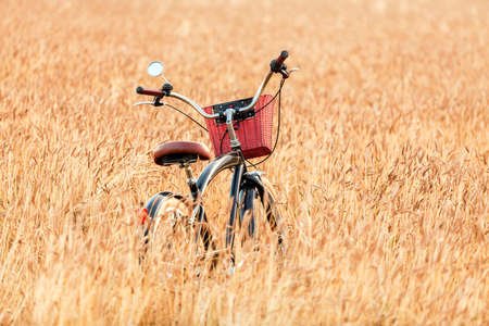 Bicycle standing in a field among wheat ears