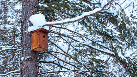Snowcovered birdhouse on a tree trunk. Winter