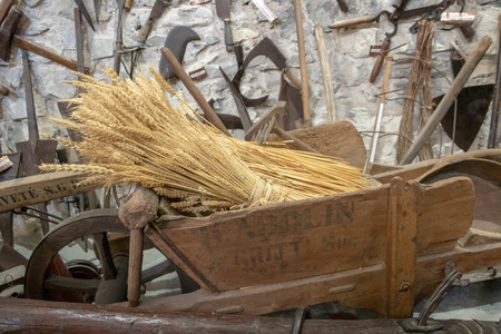 Wheat sheaves in a wheelbarrow Banco de Imagens