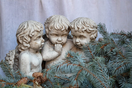 3 cherubs surrounded by Christmas tree branches