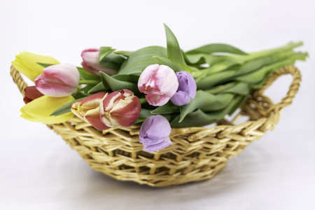 Easter and Spring, tulip bouquet