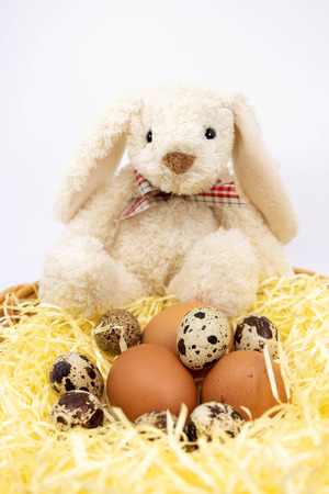 Different fresh eggs Easter Bunny