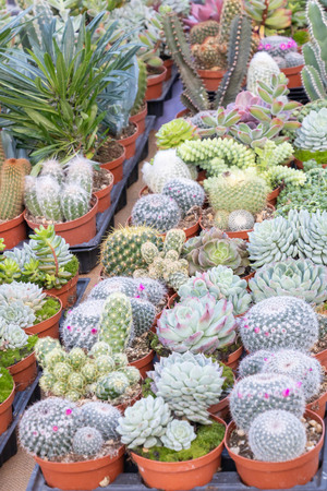 Cactus and succulent seedlings in pot, flower market stall, Provence, France 스톡 콘텐츠