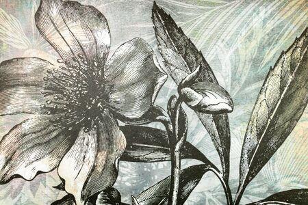 Monochrome blossom gray tones, modern and stylish