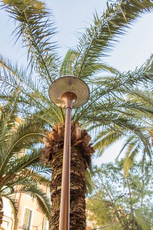 Public lighting in Nice on the French Riviera integrated into the vegetation and a palm grove - smart city planning - integration of street furniture 写真素材