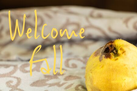Graphic resource with a quince autumn fruit with a fluffy yellow skin and text in English