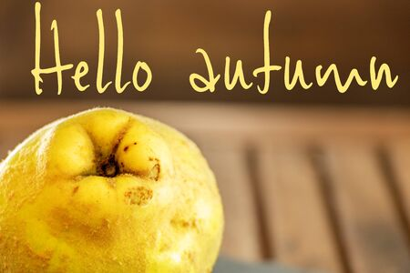 Graphic resource with a quince autumn fruit with yellow fluffy skin and text