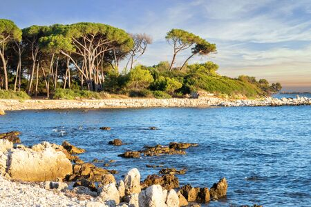 Paradise Island in Cannes French Riviera France Provence - Sainte Marguerite Island archipelago of the Lerins Islands at sunrise with its century-old parasol pines