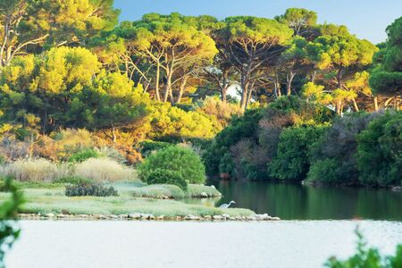 Lake Bird Sanctuary on the island of Sainte Marguerite, Lerins Islands, Cannes, French Riviera, Provence, France, with a wading tree at sunrise and trees centenarians 写真素材