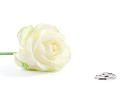 two wedding rings with white rose on background, shot on white photo
