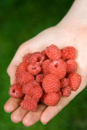 hand full of raspberries, shallow DOF photo