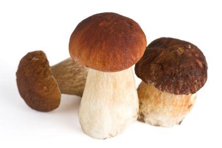 three forest mushrooms, isolated, shallow DOF