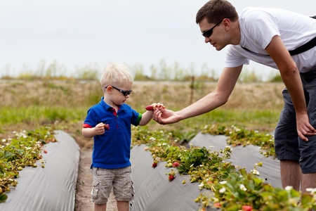 father giving the strawberry to his son photo
