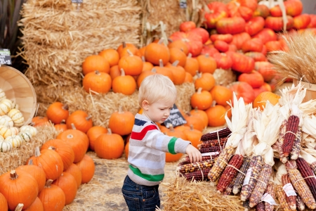 caucasian toddler choosing corn at the pumpkin patch photo