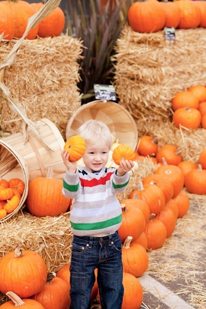 adorable caucasian toddler showing two small pumpkins  photo