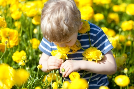 Cute little boy smelling beautiful yellow flowers stock photo cute little boy smelling beautiful yellow flowers stock photo 21827095 mightylinksfo