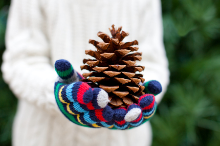 close-up of tree cone, child holding it in his hands, christmas tree at the background photo