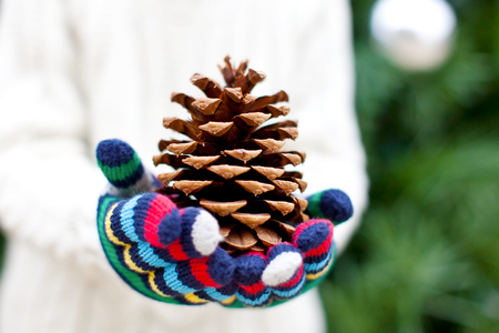 close-up of huge tree cone at christmas time photo