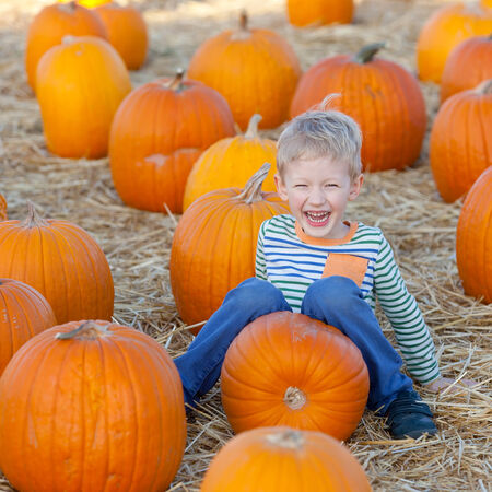 funny little boy enjoying pumpkin patch photo