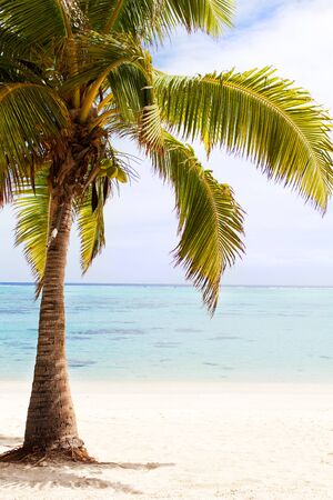 motu: view of palm tree at the empty tropical beach Stock Photo