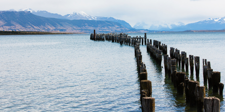 king cormorant: old pier in puerto natales, patagonia, chile