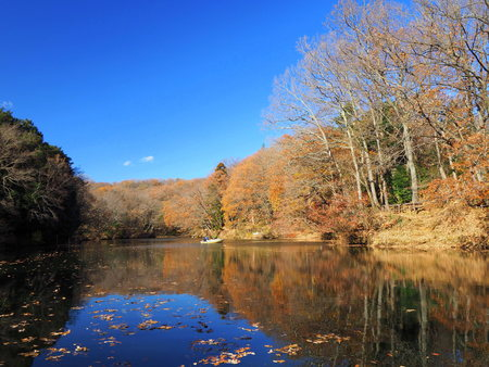 Autumn pond and blue sky