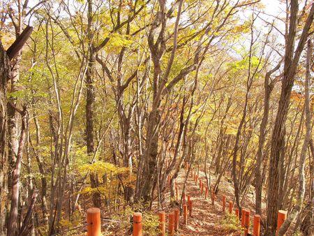 Mountain road near Mt. Gozenyama Banco de Imagens