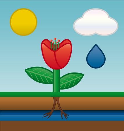 dibujo de las aguas subterráneas por absorción de raíces de flor  Foto de archivo - 7264337