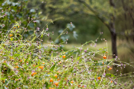 fleurs des champs: fleurs sauvages pendant l'automne pleut jour Banque d'images