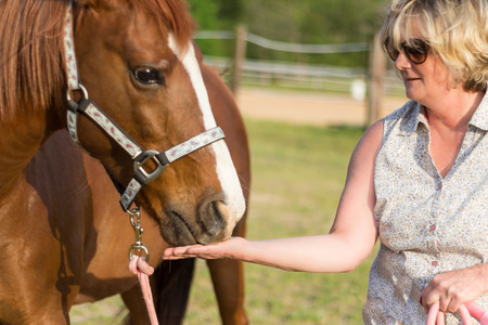 consuming: older Arabian brown and white mature horse in pasture being fed by woman Stock Photo