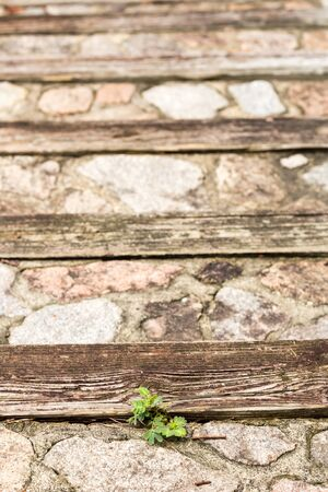 masonary: park stone wood stairway in forest walk abstract horizontal with weeds