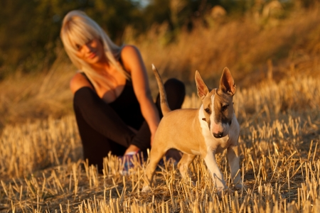 bull terrier: Beautiful blonde girl with English bull terrier puppy Stock Photo