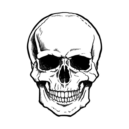 medical drawing: Black and white human skull with a lower jaw.