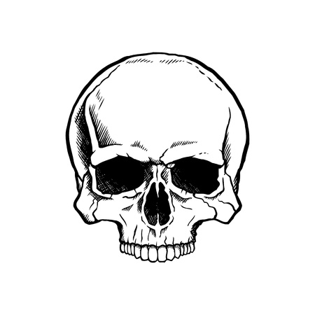Black and white human skull without a lower jaw. Ilustração