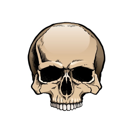Colored human skull without a lower jaw Stock Vector - 21076736